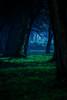 I visited Alice in Wonderland to celebrate easter! (gabormatesz) Tags: borsodabaújzemplén hungary hu happyeaster easter easter2018 aliceinwonderland wonderland canon canon80d digitalart lightroom photography fieldtest 35350mm wood deepwoods pictureoftheday