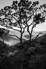 Serra do Rola Moça (Johnny Photofucker) Tags: rolamoça árvore tree albero natureza natura nature lightroom 24105mm brumadinho floresta forest foresta casabranca mataatlântica rainforest preto branco black white bw pb nero bianco noiretblanc monochrome minasgerais mg brasil brazil brasile