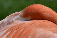 PAIRI DAIZA (107) (Photopolox) Tags: animals nature nikon d4 birds oiseaux photo photography digital picture best award fantastic excellent fantastique meilleur animal bird oiseau