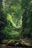 Barranco de Aqua, La Palma (Rita Eberle-Wessner) Tags: spain spanien kanaren canaryislands lapalma barrancodeaqua wald forest baum bäume tree trees farn fern fels felsen rocks grün green barranco urwald primevalforest laurisilva schlucht zauberwald