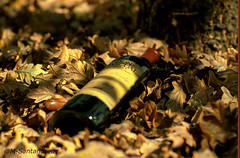 Vino y Roble (msantandreu) Tags: wine oak tree leaves bottle warm vino botella roble hojas