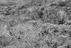 Waimea Canyon State Park, Canyon Trail, Kauai, Hawaii (Damon Green) Tags: hawaii kauai waimea canyon