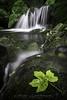 Hoja otoñal. (Fotografias Unai Larraya) Tags: paisajes arteta largaexposición río cascadas otoño navarra hojas ngc agua musgo piedra