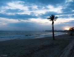 Palmera (Sanz291) Tags: coast costa palmera playa paseo marítimo roses vistas landscape paisaje nocturna sunset