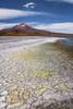 Surire salt flats textures (Andres Puiggros) Tags: d500 arica chile expedicion nikon workshop salt flats surire wide angle texture texturas