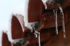 Les larmes de l'hiver (Pi-F) Tags: hiver larme stalactite glace glaçon vertical froid tuile goutte gouttière neige toit texture eau transparent transparence