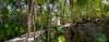 By the Jungle (Classicpixel (Eric Galton) Photography Portfolio) Tags: forest foret tropical tropiques jungle verdure plants plantes trees arbres path chemin mexique mexico quintanaroo xelha balade trail randonnée walk vegetation sony nex6 ericgalton classicpixel wood garden tree animal bois jardin