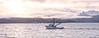 Returning home (lidili) Tags: homer alaska homerharbor kachemakbay sunrise lit chinapootpeak fishingboats spring morninglight landscape waterway tourism alaskafishing adventure