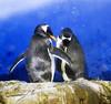 Penguin snow shower (Gill Stafford) Tags: gillstafford gillys image photograph bird arctic spain valencia aquarium penguin snowmachine oceanografic