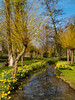 Es wird Frühling.... (achim-51) Tags: baum park gras blumen flowers landschaft osterglocken spring panasonic lumix dmcg5