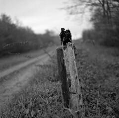 Cloture de bois (netslider57) Tags: bronica mediumformat moyen format kodak trix iso400 blackwhite blackandwhite blackandwhitephotography noiretblanc moselle france lorraine