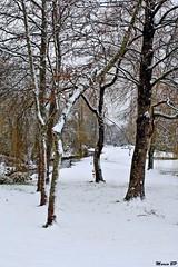 Photos Marco BP (15)_GF (marcbihanpoudec) Tags: bretagne neige plabennec plan deau lac banc arbres