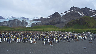 Penguin panorama, Gold Harbour