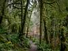 Forest Opening (Ramona H) Tags: stimpsonpreserve usa washington washingtonstate whatcomcounty hiking rain trail