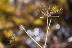 Nature in bokeh (Sony_Fan) Tags: sony alpha 6000 nature bokeh sigma art 28 60mm plant color colorful rings thomas umbach schwelm dn photographer natur fotograf bunt kreise kreis rund farbenfroh wetter jahreszeit winter sonne sun season outdoor sonyfan