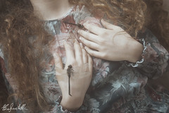 (Elis's ☾) Tags: dragonfly libellula magia magic fairy fairytale favola fiaba fable fantastic fantasia fantastique luce light model girl ragazza canon5dmark3 400iso 3580mm animals insect hands mani hairs curlyhair longhair body corpo fineart art arte artistic conceptual concettuale dress vintage analog pellicola film portrait ritratto portraiture ritrattistica fly glare bagliore photoshop adobe skin pelle portfolio photo photooftheday picoftheday analogic
