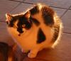 Ridley Scott (bego vega) Tags: gato cat pet mascota ridleyscott animal madrid vf bego vega bv veguita begovega