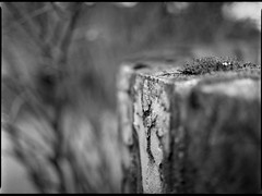 old concrete wall, moss-covered, shallow depth of field, North Asheville, NC, Mamiya 645 Pro, mamiya sekor 80mm F-2.8, 3.20.18 (steve aimone) Tags: wall concrete moss mosscovered shallowdepthoffield northasheville northcarolina mamiya645pro mamiyasekor80mmf28 mamiyaprime primelens ilfordfp4 ilfordilfosol3developer 120 film 120film mediumformat monochrome monochromatic blackandwhite