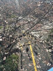 IMG_0112 (Coto Language Academy) Tags: iidabashi outside school cherryblossoms