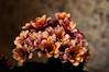 beauty (Arianeta LIB) Tags: flower crete greece