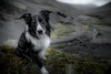 12/52 Paddy at the Old Mine (JJFET) Tags: 52 weeks for dogs paddy border collie 12 dog sheepdog