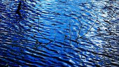 blue (Darek Drapala) Tags: blue water waterscape reflection waves reflects mirror panasonic poland polska panasonicg5 nature natural silhouette silkypix silence lumix light waterreflects