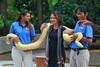 Sentosa, Singapore, November 11th 2008 (Southsea_Matt) Tags: november 2008 autmn canon 30d singapore sentosa snake burmesepython reptile