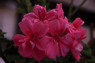 Flores nuevas en casa de Guille...