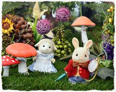 Sylvanian Families - Alice in Wonderland (Sylvanako) Tags: sylvanian alice winderland rabbit