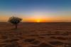 SUNSET EN EL DESIERTO + ESTRELLA FUGAZ (Luis Bardisa Gallardo) Tags: 16mm tokina landscape dubai emiratos eos canon6d canon eau uae estrellafugaz fugaz sunset desierto sol atardecer