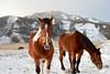 . (428sr) Tags: nikon horse 馬 otus1455 zf2 nature carlzeiss d800e