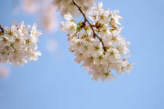 Blossom in the air
