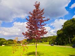 Árvore no Parque Tingui (Eduardo PA) Tags: curitiba paraná nokia pureview microsoft windows phone 950xl lumia wp árvore no parque tingui