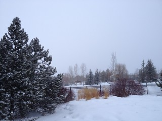 Spring Time in YYC