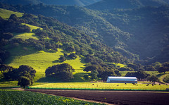 River Road, Salinas (DidaK) Tags: santaluciamountains cows salinasvalley centralcalifornia