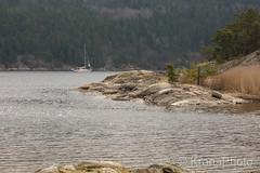 Early sailing season, Svinesund, Norway (KronaPhoto) Tags: 2018 natur vår sail sailboat seilbåt båt båtliv spring early water seascape landskap nature norway svinesund tree forest rocks svaberg