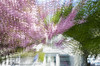Impression printanière 02 (letexierpatrick) Tags: printemps spring flowers fleurs fleur flower floraison colors couleurs couleur jardin garden nature nikond7000 nikon