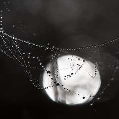 Collier de perles **--- ° (Titole) Tags: cobweb backlit titole nicolefaton bokeh droplets drop squareformat thechallengefactory