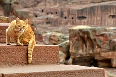 Cat Stepper (Pedestrian Photographer) Tags: petra jordan day daytime february feb 2018 dsc7112 cat kitty feline step steps stair stairway ancient city ribbet