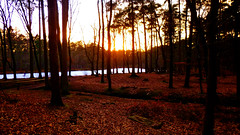 In The Winter Woods At Dusk (obscure.atmosphere) Tags: deutschland germany hamburg laub foliage dusk abend sonnenuntergang 日没 일몰 twilight dämmerung 夕暮れ 황혼 sundown sunset evening anochecer atardecer ocaso crepuscule soleil natur nature naturista naturaleza 自然 자연 wald forest bosque selva foret 森林 숲 woods bäume trees exposure invierno hiver 冬 겨울 tree baum himmel heaven sky cielo cieux 天 하늘 sol wolken clouds nubes nuages 雲 구름 fluss river fluir ecoulement 流れ 흐르는 see lake lago lac 湖 호수 klövensteen ice eis frozen