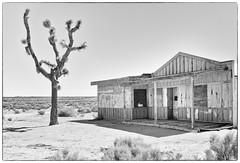 hidden life (Maureen Bond) Tags: ca maureenbond desert mojve bar cafe food drink boarded joshua hot dry alone nooneinsight screamifyouwant noonewillhearyou building highkey framed