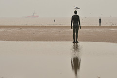 Bird brain (PentlandPirate of the North) Tags: birdbrain idiot twit crosby anotherplace liverpool antonygormley seagull