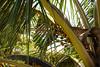 SriLanka 17_18 (26 von 48) (philip.eggimann) Tags: srilanka reisebilder travelling