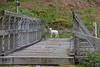 SpringWatch.. (Harleynik Rides Again.) Tags: lamb spring glenelg bridge highlands scotland westerross littlebopeep nikond810 harleynikridesagain