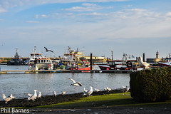 Ramsgate Harbour and seagulls (philbarnes4) Tags: ramsgate ramsgateharbour seagulls thanet kent philbarnes dslr nikond5500