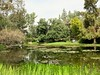 Norton Simon, .18/12 (Basic LA) Tags: pasadena pasadenaca socal la losangeles california coloradoblvd nortonsimonmuseum museum garden pond sculpturegarden