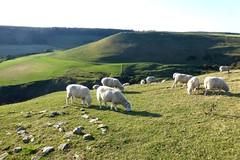 Dorset, England (east med wanderer) Tags: dorset england uk worthmatravers farming nationaltrust purbeckhills