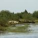 Parque Nacional Pripyatsky