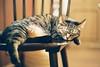 CNV000027 (雅布 重) Tags: f100 nikkor 50mm f14d tudorcolors xlx200 film snap japan tokyo 2018 cat 寵物 貓 小貓