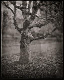 Lerebours.oak.neg.jpg